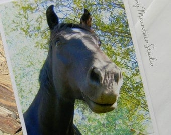 Whimsical View of a Horse Photo Note Card. Rural Montana Equine Photography.