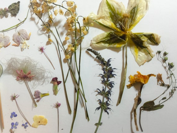 Real dried and pressed flowers for craft by gisellebethke for Dried flowers craft supplies