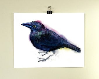 Grackle. A signed, archival print of black bird watercolor painting.