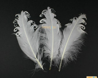 10 Pieces White  Feather 10-15cm (YM10)