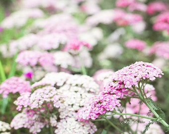 Yarrow Flowers Photo- Flower Photography, Pink White Floral Art, Pink Yarrow Print, Nature Photography, Botanical Print, Garden Wall Art