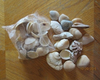 Bulk Lot of 50 Sea Shells and Shell Pieces
