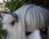 grey low sitting wolf ears