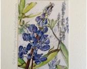 Tiny Botanical Print - Graduation Gift - Wedding - ACEO - Blue - Purple - Flower -  Lupin Flowers - Fine Art Print