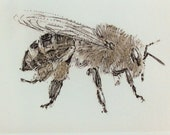 Honey Bee drypoint print. Limited edition