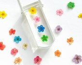 Forget Me Not Rainbow Necklace - natural pressed botanic resin pendant