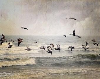 Pelican Brief, Beach Photography