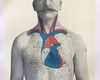 Antique Anatomy Bookplate Print 1900s Heart Chest Moustache 1908 Vintage Medical Diagram