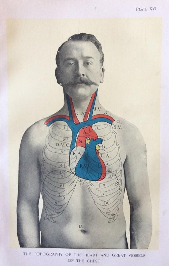 Anatomía antigua Bookplate impresión de 1900 corazón pecho
