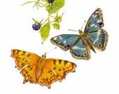 Butterflies with Brambles, Apatura iris and Polygonia c-album, Purple Emperoro Comma, HOME DECOR, Unique, Collectible, Home Decor Gifts