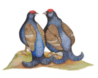 ORIGINAL ART Exquisite & highly detailed art drawing of Black Grouse Blackgame, Best Friends, Twins Brothers or Homosexual Wedding Bird Art.