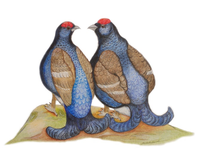 Limited Edition of Two Black Grouse, Grouses Blackgame,  Best Friends Mates, Two Friends, Brothers or Homosexual Gay Couple, LGTBQ, LGBT Art