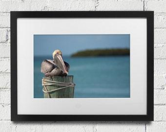 Pelican Print Islamorada, Key West Florida Keys.  Pelican Post, Pelican Sitting Pelican Close Up