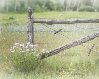 Farmhouse Chic Decor, Rustic Country Art, Wall Decor, Pastel Wall Art, Fence Art, Country Photo   'Summer Meadow'