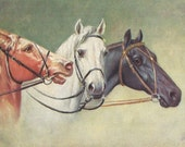 Three Early Bridles - Antique 1900s Unsigned Horse Art Postcard