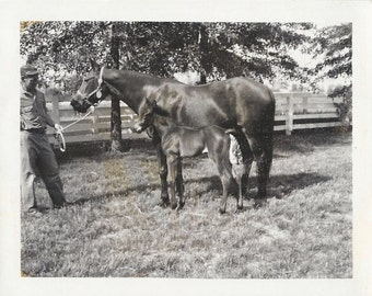 Irish Jet and Filly - Vintage 1960s Named Thoroughbred Mare and Foal Photograph