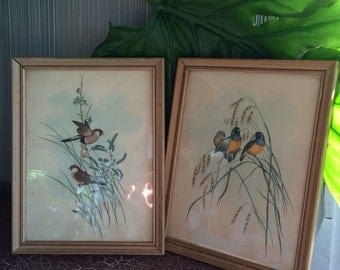 Vintage framed bird prints wall hangings pair