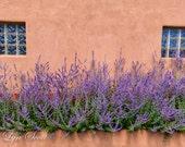 New Mexico Flowers -  Nature, landscape, pink, lavender, fine art, floral, art, garden, rustic, home decor, wall art, southwest
