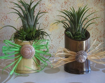 Bamboo Mini Air Plant Holder with Raffia and Shell-Cute and Crafty