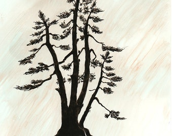 "Ink Drawing, ""Spruce"", print, matted, backed, ready for framing"
