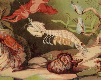 1868 Antique print of SEA LIFE. CRUSTACEANS. Crabs. Lobster. Marine animals. 149 years old gorgeous lithograph.