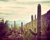 Southwest Dream - Southwest decor, desert photography, Arizona photo, cactus, fine art photograph, Southwest art
