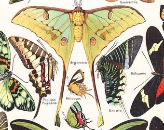 Vintage French 1920s lithograph Print Butterflies moth book page