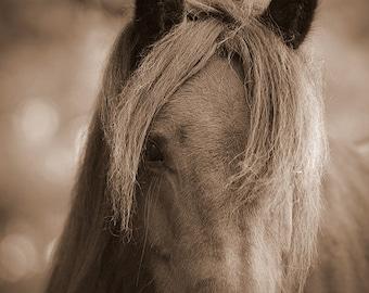 Horse wall art, horse decor, horse photography, equine art, rustic, sepia, barn decor