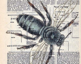 Vintage Illustration Printed on Antique Encyclopedia Page - Honey Bee