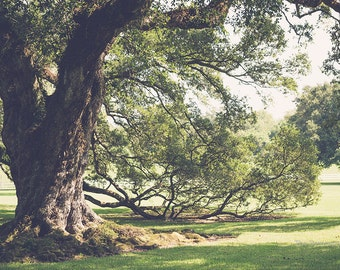 Louisiana photography, live oaks, oversize wall art, rustic decor, nature photography, louisiana decor, oak alley, romantic art, valentine