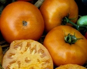 Golden (Yellow) Jubilee Tomato Seeds (20 ct)