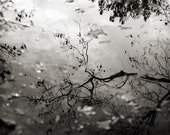 Black & White Nature Photograph, Tree and Sky Water Reflection Picture, Horizontal Wall Art Photo Print, Monochromatic Photography