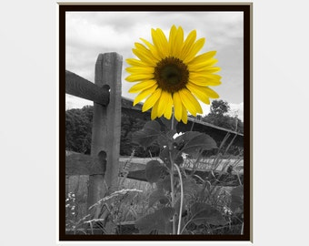 Yellow Gray Wall Art Photography/Sunflower/Floral/Bathroom/Bedroom Decorative Matted Decor Picture