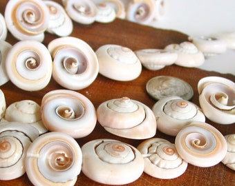 """15"""" 16mm 18mm Conch Shell coin cone Spiral beads - cream white - Full Strand"""