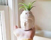 Buddha planter with plant, air plant holder, Thai Buddha, spiritual gift