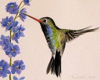 hummingbird original watercolor blue and green larkspur hummingbird paintings bird watercolors animal paintings