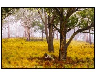 Misty morning , Landscape photography, Fine Art print, Ready to frame, Australian, Trees, Wall hanging, Winter, Nature, Bush, Home Decor