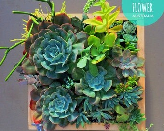 Mixed Succulents Planted in Handmade Timber Planter Box 30x30cm