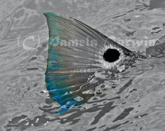 "Red Drum tailing pop of color photo: Red Fish tailing photo on canvas 11x14"", redfish art, spottail bass photo, redfish tailing, redfish"