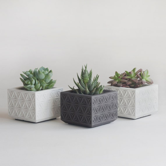 Mini Concrete Planters : Set of three mini concrete succulent planters by nystromgoods
