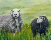Original art - soft pastel painting - Herdwick Sheep of the Lake District.