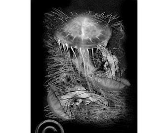 Sea Life #5, Inkjet print  7x9 image on 11x14 archival paper