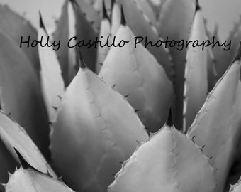 Black and White Cactus Fine Art Photograph Multiple Sizes With or Without Mat