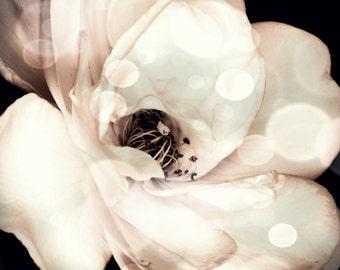 White Flower Print, Rose, bedroom decor, neutral tones, floral wall art