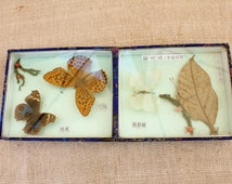 specimen  butterfly nature study A caja doble vintage butterfly tray made in China