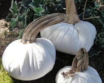 Handmade White velvet pumpkin with real dried stems.