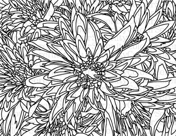 Adult Coloring Page Large Flowers Printable Instant