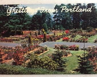 Vintage Postcard Oregon Greetings fom Portland OR Rose Gardens