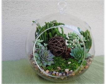 "XLarge Globe Succulent Terrarium Kit ""Woodsy"" with Sempervivum and Crassula-Succulent DIY Kit-Birthday Gift-Housewarming Gift-Gift for Him"