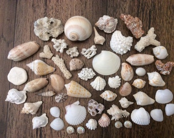 Sea Shell and Coral Assortment (50 Pieces)